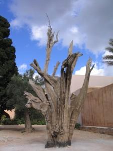 Cêdre du monastère d'Arkadie (crête)